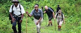 Nkuringo Safaris | Bespoke Uganda Tours, Gorilla Trekking Safaris